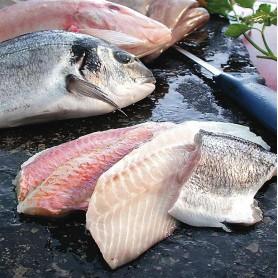 """Fischteller """"Mittelmeer"""" (15 Port., je ca 200 g)"""